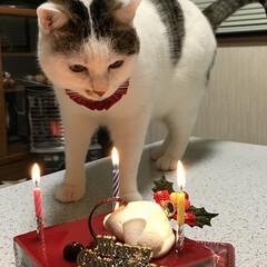 毎日の癒し/猫の日 おはようございます(=^・^=) にゃん…(4枚目)