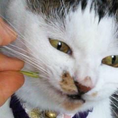 毎日の癒し/猫の日 おはようございます(=^・^=) にゃん…(8枚目)