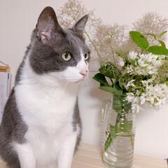 うちの猫 猫と花🐈⬛🌸 ちょっと気取ってみました…(1枚目)