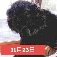 5分でできる/簡単ヘアアレンジ/小学生女子/記録用 本日のヘアアレンジ お団子ハーフアップ …