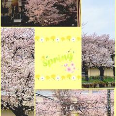 思い出/花見/雪/桜/春/住まい/...