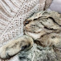 保護猫/猫 まだ母猫に甘えて眠っていたい年齢だと思う…