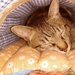 猫グッズ/キジトラ/ハンドメイド/猫/アイデア さぶが寝ているドーム型のマットは裁縫が下…