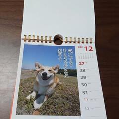 コーギー/メモ用紙/カレンダー 今日で2020年も幕を閉じる。 全てのカ…
