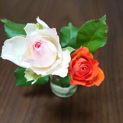 花/薔薇 昨日は 娘夫婦と九州最大のお花やさんエフ…