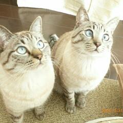 猫派 男の子の兄弟です。 どちらも食いしん坊!…