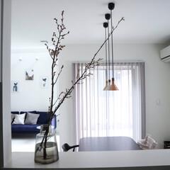枝物/桜/キッチンカウンター/リビングダイニング/花のある暮らし 久しぶりに枝物飾ったら、やっぱりいい感じ…