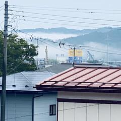 霧/寒い/太陽/やませ こんにちは🎶 今日も🌞にはお目にかかれま…