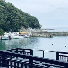 カモメ/宮古/浄土ヶ浜/三陸復興国立公園/お出かけ おはようございます。🎶  今日は朝から肌…(2枚目)