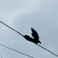 飛行/子育て/鳥/カラス こんにちは🎶 朝方までの雨もあがり、ムシ…(6枚目)