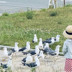 カモメ/宮古/浄土ヶ浜/三陸復興国立公園/お出かけ おはようございます。🎶  今日は朝から肌…(5枚目)