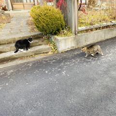 取っ組み合い/仲裁/ホウキ/ケンカ/野良猫/トラ猫/... おはようございます🤗  朝出かけようとし…