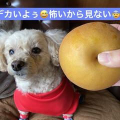 デカい/バナナ/林檎/食用菊/トマト/柿/... おはようございます。☔ 朝から☔です💦 …