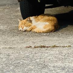 夏日/猫/野良猫/野良チャ君 今日の野良チャ君!🐈 あまりに気温が高か…
