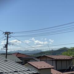 黄色/花/散歩/晴れ/天気 おはようございます。🎶  今日もいー天気…