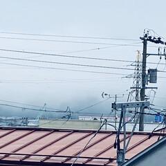 霧/寒い/太陽/やませ こんにちは🎶 今日も🌞にはお目にかかれま…(2枚目)