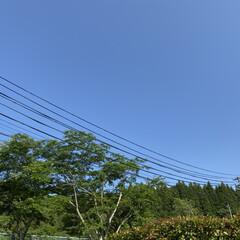 お昼寝/お散歩/トイプードル/トイプー こんにちは🎶 久々のおてんきです🌞\(^…