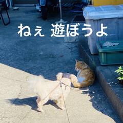 野良茶君/野良猫/散歩/華音/トイプー/トイプードル/... こんにちは🎶 今日は、湿度が63%気温2…(3枚目)