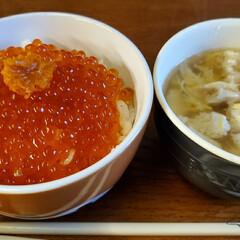 流れ星/桜/お弁当/ソーシャルディスタンス/おうちごはん こっちもソメイヨシノが ほぼ終わりました…(4枚目)