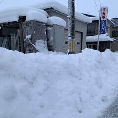 雪国秋田/大雪/住まい 車をだすのも大変な雪の量です 木の枝も雪…