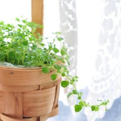 観葉植物/インテリア/植物/生活の知恵/グリーンインテリア/ガーデニングインテリア/...