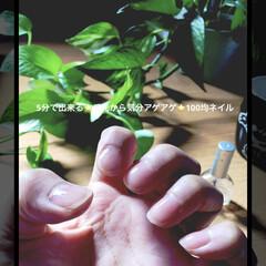 光る/気分アゲアゲ/コスパ最高/ズボラ/トップコート/ネイル/... ほっておくとカサカサになりやすい手。ごく…