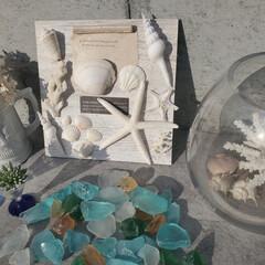 シーグラス/珊瑚/ボード/🐚貝殻 家にあった🐚でボードを作りました✿*:・゚