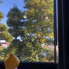木/雪だるま/窓枠/ここが好き 外を眺める雪だるまくんを外と景色と見比べ…(1枚目)