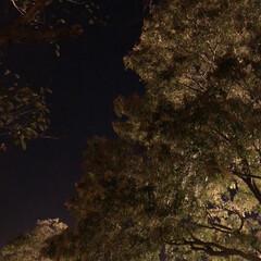 夜空/冬/秋 そろそろ冬になる。 皆さん、カイロの準備…