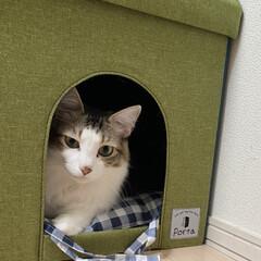 完全室内飼育/保護ネコ/猫屋敷 雨でアンニュイなオレ