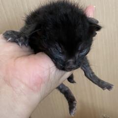 猫屋敷/TNR/野良猫/保護猫/子猫 期間限定の預かり。 まだ可愛らしさなんて…