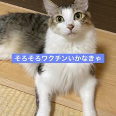 猫屋敷/完全室内飼育/保護猫/車/フロントガラス/猫 代車生活が終わった。 軽自動車のフロント…