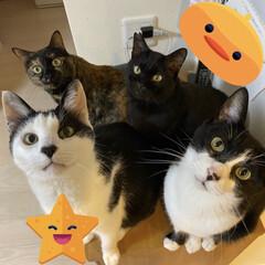 完全室内飼育/猫屋敷/保護猫 電話台の上でひしめき合う ねこのみなさん