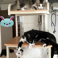 ニャングルジム/大人気/再利用/レンジ台/完全室内飼育/保護猫/... 捨てようと思った古いレンジ台。 いつの間…(1枚目)