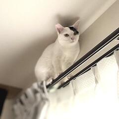 アニマルコミュニケーション/完全室内飼育/保護猫/猫屋敷 網戸にとまったセミの鳴き声に 興奮してカ…