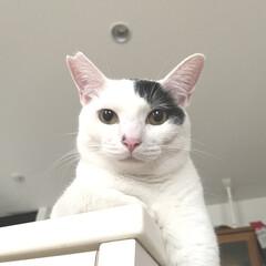 保護猫/完全室内飼育/猫屋敷 二重アゴなオレ お餅みたいって言っちゃダ…