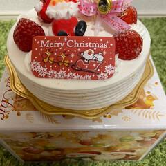 愛媛/転勤妻/クリスマスケーキ/ホーランドロップ/我が家のうさぎさん/実家の愛犬/... 遅れましたがMerry Xmas🔔 1年…