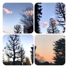 空/風景/夕暮れ/ピンク曇/冬の風景/空が好き 夕方の景色  ぽっかりピンク曇と 葉が落…