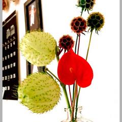 「気分を上げるために、 お部屋の花をかえま…」(1枚目)