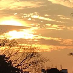 夕陽/夕焼け/夕暮れ/部屋から見る夕陽/暮らし/癒し 今空 16:40 部屋の中に 夕陽が差し…(3枚目)