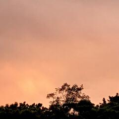 「PM 5:30の空  真っ赤な夕焼け、 …」(3枚目)