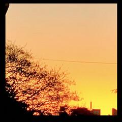 夕焼け/夕暮れ/空/窓からの眺め こんばんは⭐️  今日も綺麗な夕焼けでし…