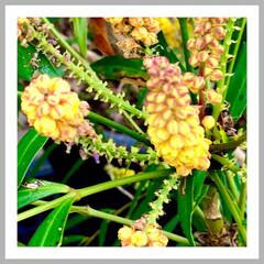 花/植物/元気が出る花/癒し/暮らし/花のある生活 おはようございます🌱  はっきりしないお…