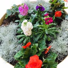 花/花のある暮らし/癒し おはようございます🌱  今日の花達 寒く…(5枚目)