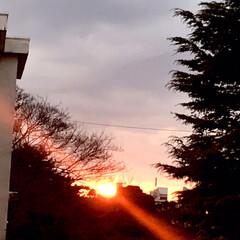夕陽/夕焼け/空/部屋から見る夕陽 1/17    16:40  今空 今日…