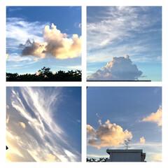 空/雲/雲のかたち/色々な形の雲 2、3日前の空 左上、子犬が2匹 遊んで…