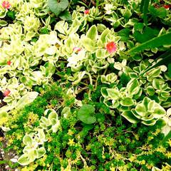 花/グリーン/花のある暮らし おはようございます☀  カーテンを開けて…(2枚目)