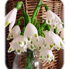花が好き/暮らし/自然に生えてくる花/ナチュラル/おうち時間/テイスト/... 可愛すぎる💕 マンションの 雑草が生えな…(1枚目)