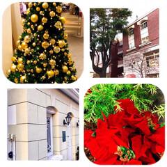 クリスマスモード/いつもの街/好きな場所 近くのお店も、 クリスマスモードいっぱい…
