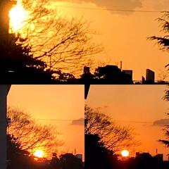 夕陽/夕焼け/日が沈むまで/自粛生活/巣篭もり/癒し 1/16 16:40  今空、夕陽が沈む…